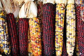 corncobs